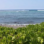 Kahaluu Beach, Kona Surf Break
