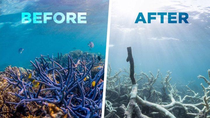 kona boys blog post reef safe suncreen coral bleaching